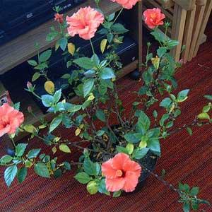 potrebno-za-uzgoj-cvijeca