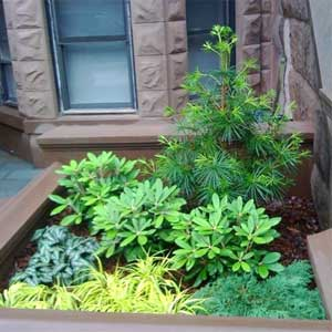 zimzelene-biljke-na-balkonu