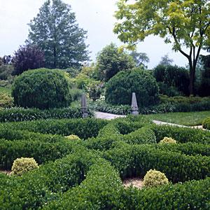 najpoznatiji grmovi