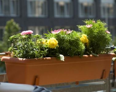cvijece_za_balkon