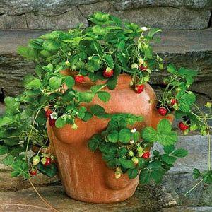 presadivanje-biljka