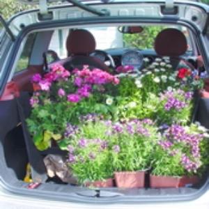 prijevoz biljaka