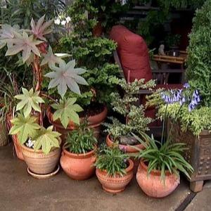Cvijeće  Priprema biljke za presađivanje u vrt