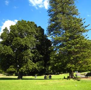 Odabir stabla za vrt