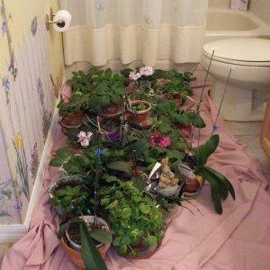 vlaznost zraka za biljke