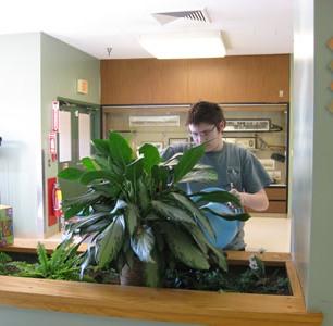 zalijevanje biljke