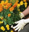 zemlja-za-sadnju-cvijeca