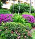 grmovi