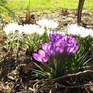 proljetni-radovi
