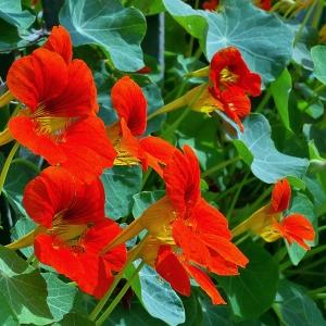 cvijece-samo-kod-kuce