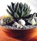 kaktusni-vrt