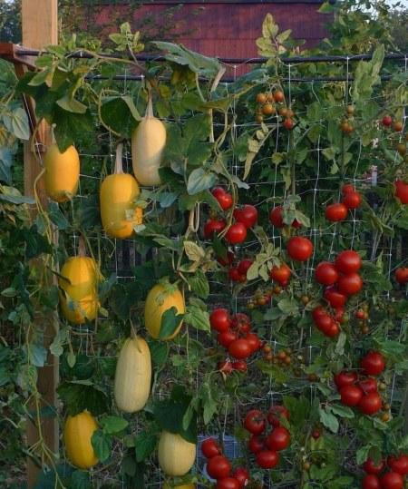 Cvijeće  20 kreativnih ideja za vertikalne vrtove